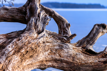 worn driftwood withblue sky and water