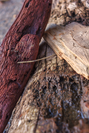 close up red driftwood
