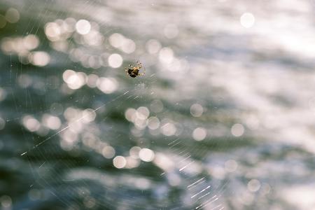 spider sitting in web 스톡 콘텐츠