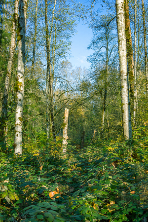 Blue skies through green forest Stock Photo