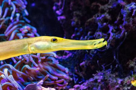 yellow fist in purple underwater