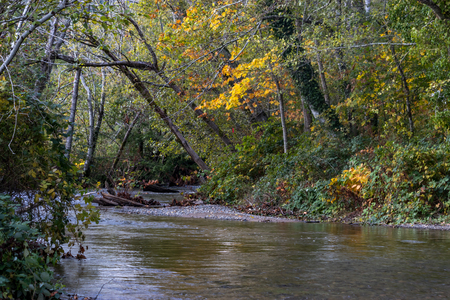 fall leaves over river Stock Photo