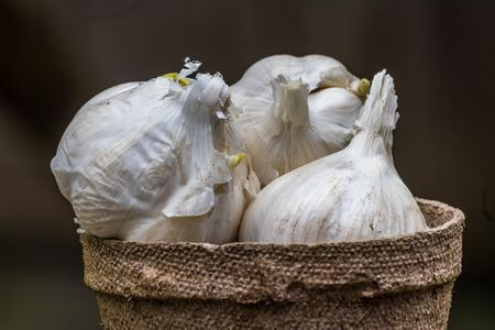 gralic piled in a pot Stock Photo
