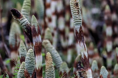 spring wildflower buds