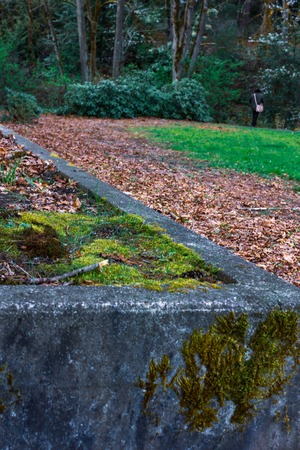 mossy wall in fall
