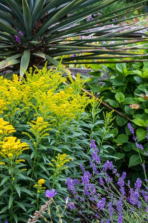 yellow and purple wildflowers in washington garden Stock Photo - 105532459