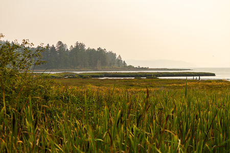 wetland landscape with forest cattails and marsh under hazy sky
