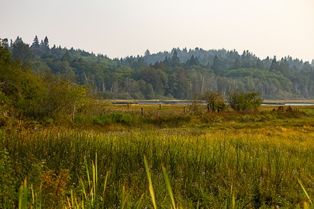 old pilings in marshy grass covered wetlands with forest behind