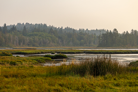 green and yellow grass in marshy wetlands under hazy skys Stock Photo