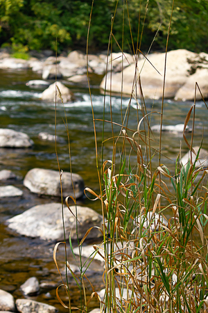 tall grasses growing green on edge of river  with boulders and sunlight during washington summer