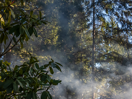 smoke from burn pile rising through forest of trees