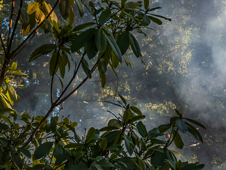 leaves and foliage in front of smoke filled forest