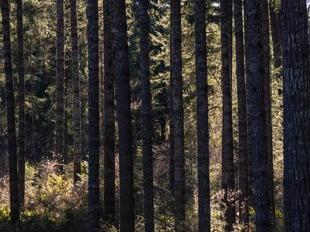 dark tree trunks and bright green undergrowth Stock Photo