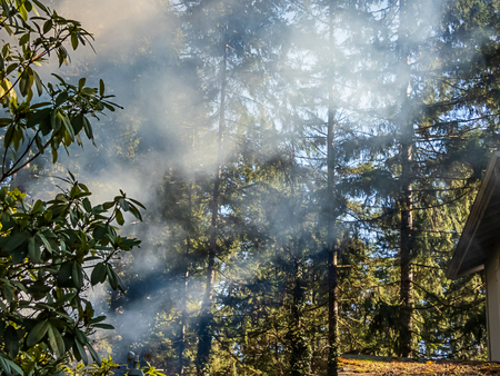 smoke from burning pile rises through trees near roof