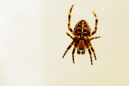 brown patterned spider on web
