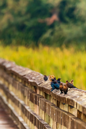 birds on railing in wetlands by forest in northwest