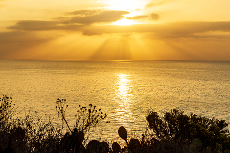 silhouette of plants on cliff overlooking bright sunrise with sunrays on pacific Archivio Fotografico