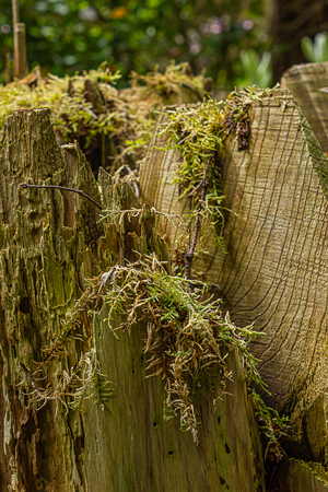 moss growing on cut logs of downed tree in forest