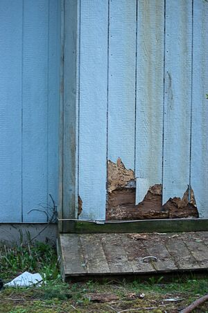 cracked damage from termites along house edge in siding Stock Photo