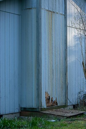pest and weather damage done to siding on old home