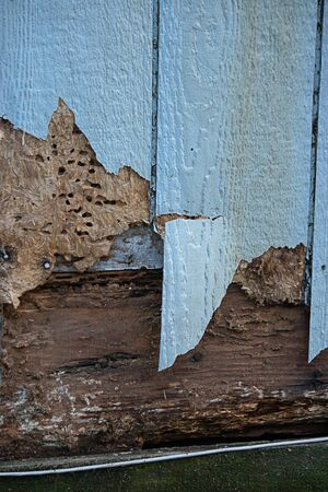 blue siding with termite and weather damage cracking it Reklamní fotografie