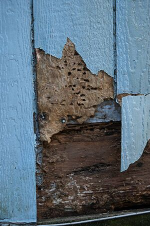 siding with termite and weather damage spinters wood