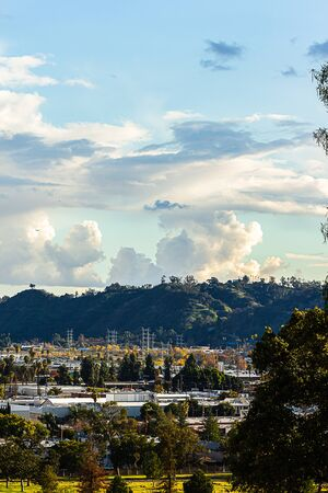 evergreen trees and palms with city rooftops elysian park hills with clouds