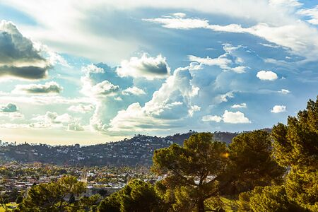 evergreen trees with panaramic view of buildings and hillside homes Imagens