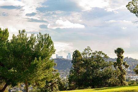 evergreen trees with panaramic view of buildings and hillside homes with LA towers in distance Imagens