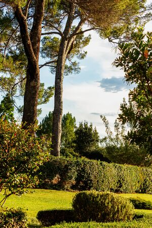 tree lines garden with boxwood and lawn, bushes, blue sky and clouds Stockfoto - 128524191