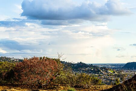burnt bushes from fire damage on hillside overlooking cityscape with cloudscape Imagens