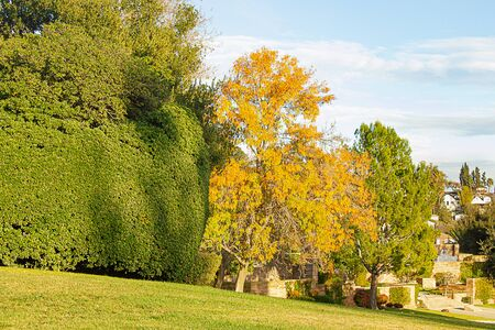 tree lines garden with boxwood and lawn, bushes, blue sky and clouds