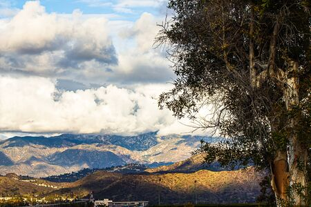 eucalyptus tree on hillside overlooking homes, roads, and mountains with clouds Imagens
