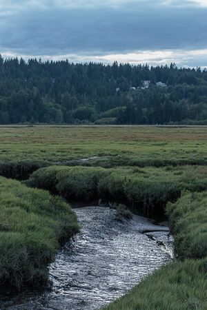 muddy low tide wetland stream surrounded by tall grass Stock Photo