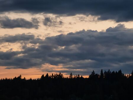 trees stand up against clouds and sunset in stormy sky