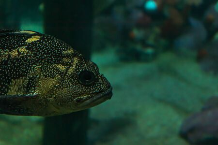 head of large fish in saltwater tank