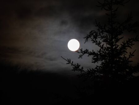 full moon through clouds and pine tree Imagens