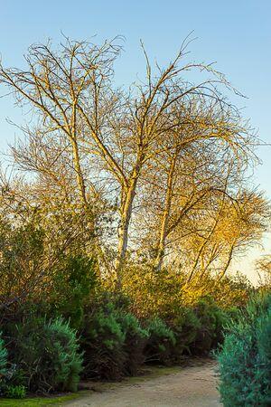 dirt path through shrubery and diciduous treeline Reklamní fotografie