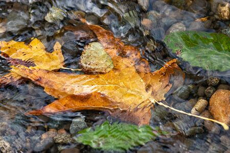 some multi colored autumn leaves under a thin layer of moving water 写真素材