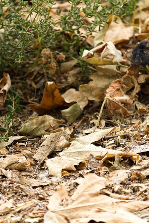 autumnal pile of fallen dry sycamore leaves and grass on hiking trail Stock Photo