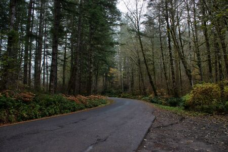 road leading down foggy morning forested area Stock Photo