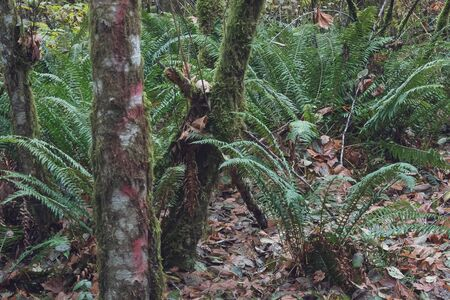 moss covered tree trunks with green ferns and dry leaves
