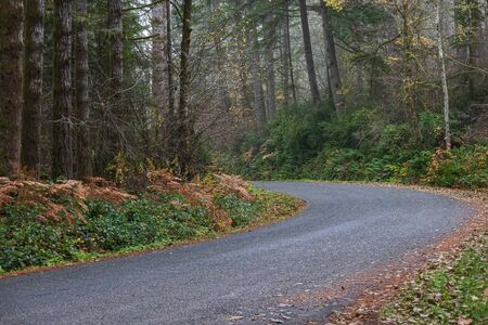 autumn forest with golden ferns and shrubbery along roadway with dry leaves Stock Photo