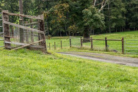 a farm road going through green pasture
