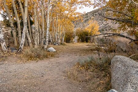 hiking trail with rows of aspen leading to lake in autumn
