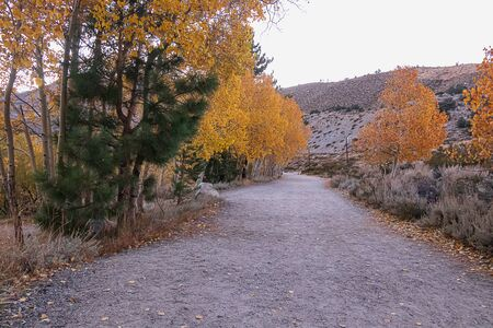 road with autumn leaves and aspen trees through mountains in the evening