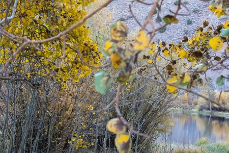 branches of aspen trees with golden leaves along lake shore in early morning