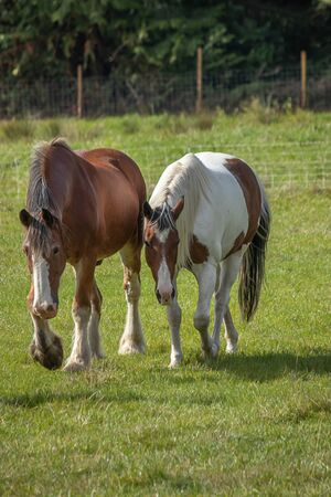 two beautiful horses standing on green field