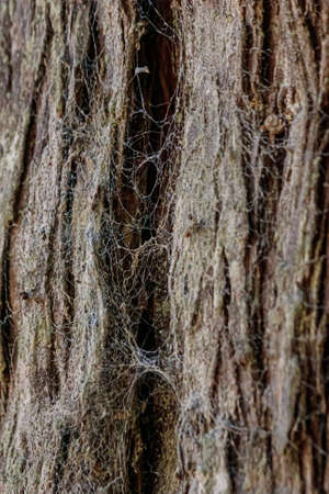 close up shot of a spiders web