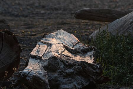 old white peice of driftwood lit up by the sunset at dusk